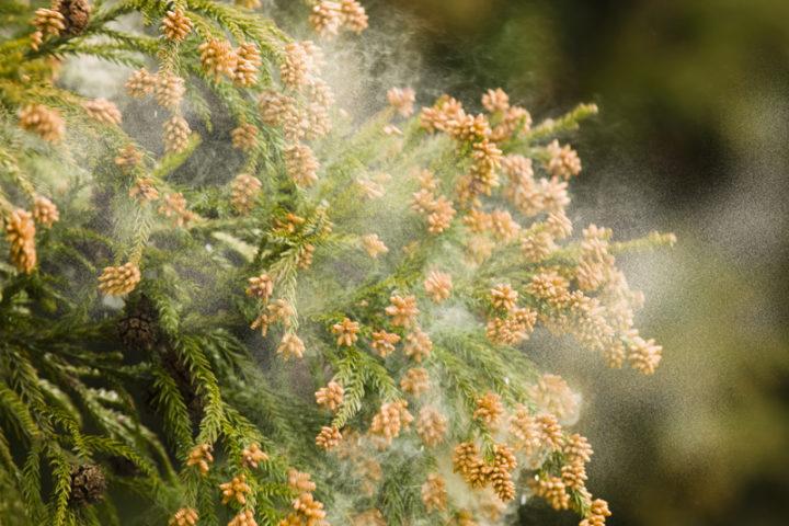 花粉症時期のスキンケアと対策方法 | 【公式】肌能力回復フェイシャルスタイリストサロンの画像